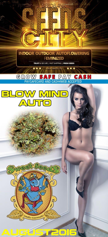 cannabis samen bestellen Blow Mind Auto Newsletter August2016 seeds.city