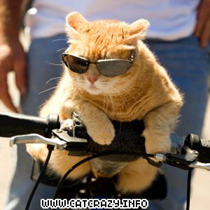This is one cool cat!