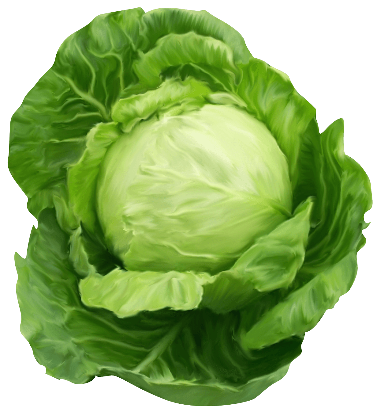 free png Cabbage Clipart images transparent