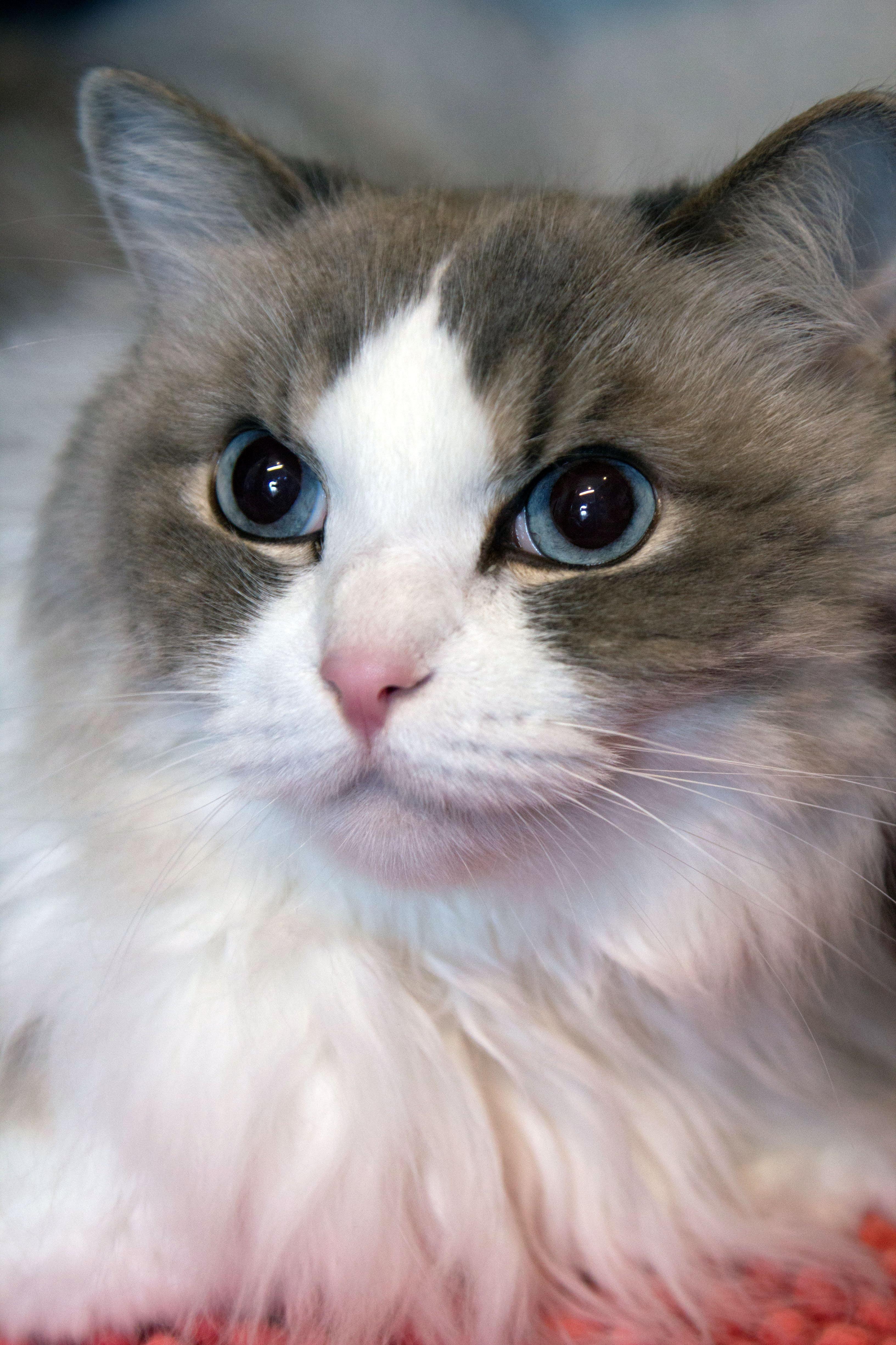 Adopt Paxton on Pets, Pet adoption, Pet search