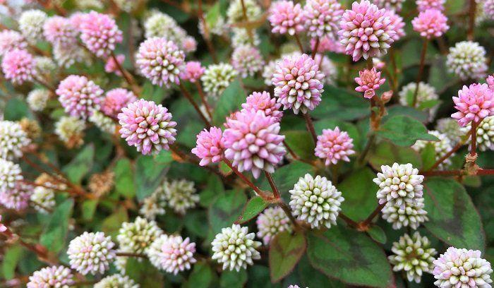 Photo of グランドカバーにおすすめの強い植物20選