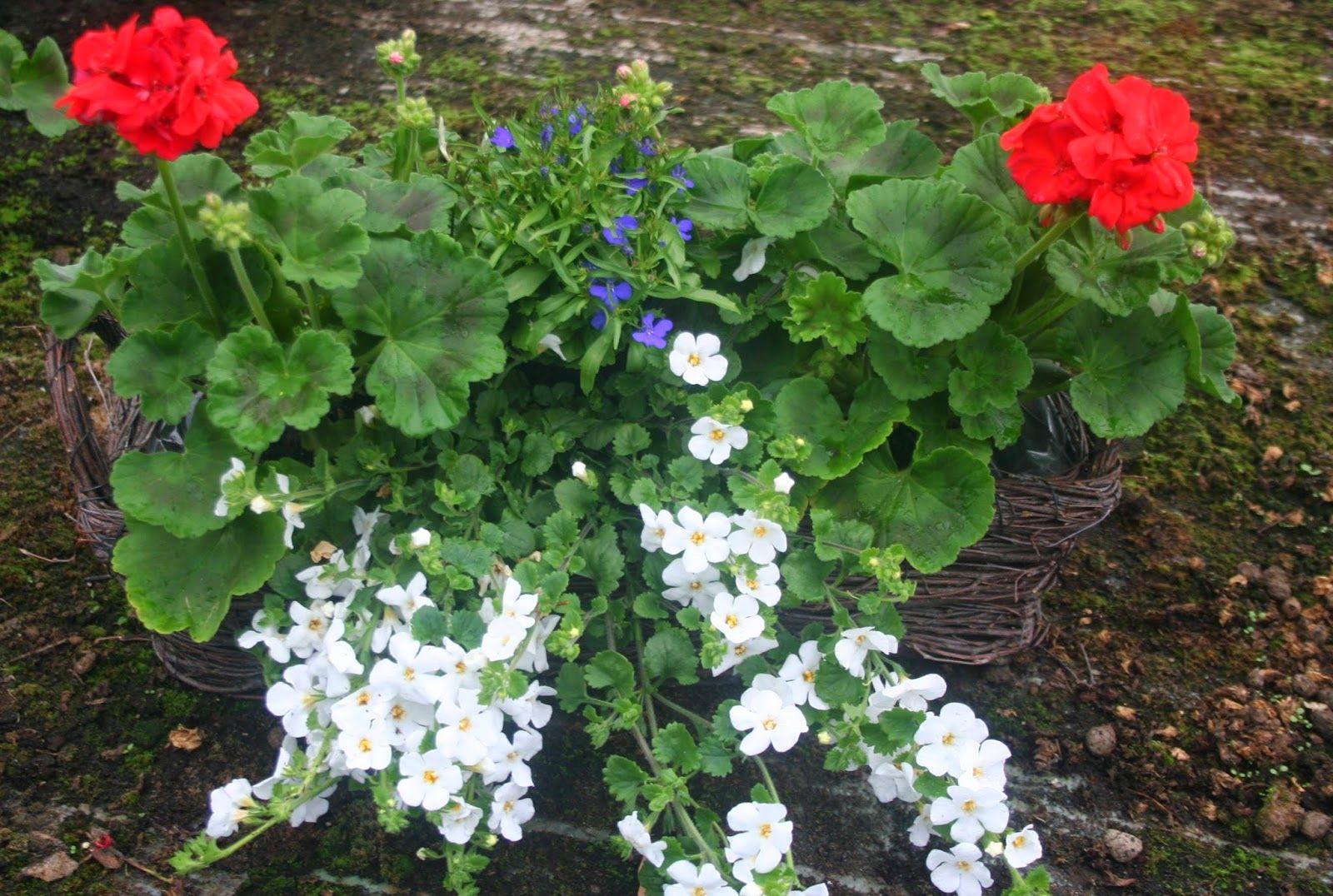 Kompozycje Kwiatowe Na Balkon I Do Ogrodu Hanging Baskets Garden Floral
