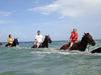 Heritage Beach Horse Ride From Ocho Rios Or Runaway Bay Jamaica