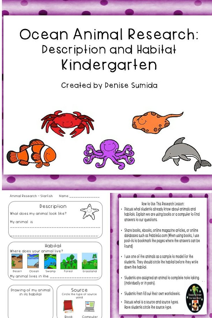 This Beginning Note Taking Lesson Guides Students To Research The Diet And Fun Facts Of Land Animals Animal Note Taking She Ocean Animals Fun Facts Clown Fish [ 1102 x 735 Pixel ]