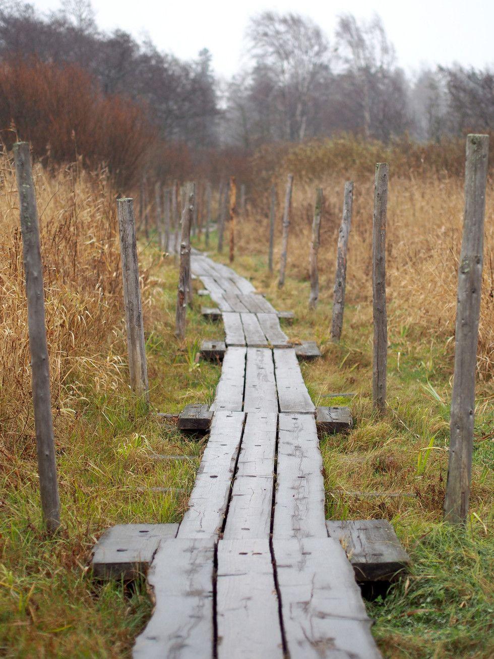 Luontoretki keskellä Helsinkiä | Viikin luonnonsuojelualue, Vanhakaupunki - Pupulandia | Lily.fi