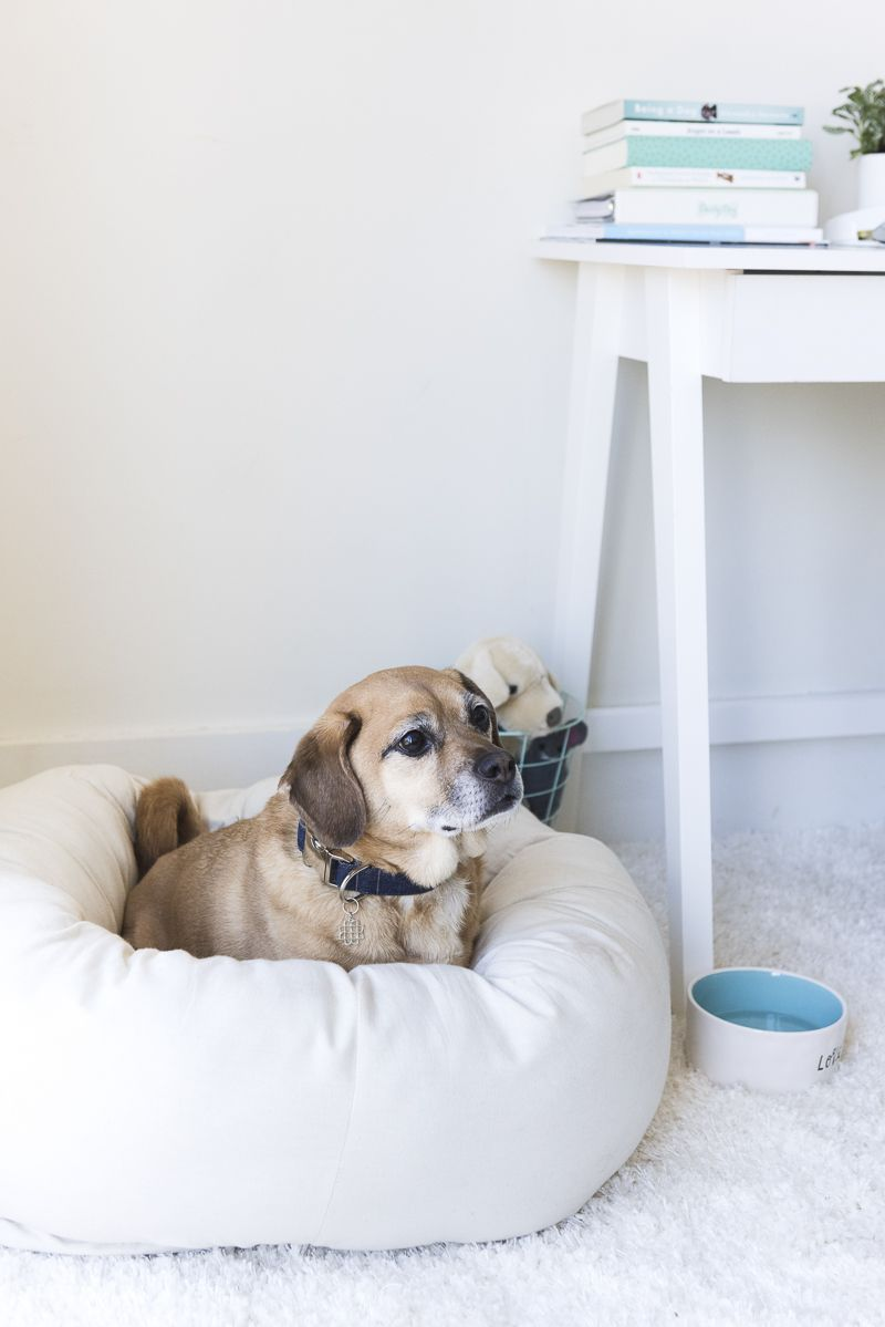 Office Accessories For The Dog Obsessed For Pets Dogs