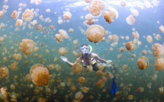 70 Unbelievable Underwater Destinations You Have To Visit