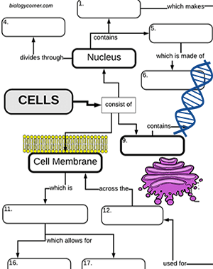 Cell Structures: A Graphic Organizer   Cell structure