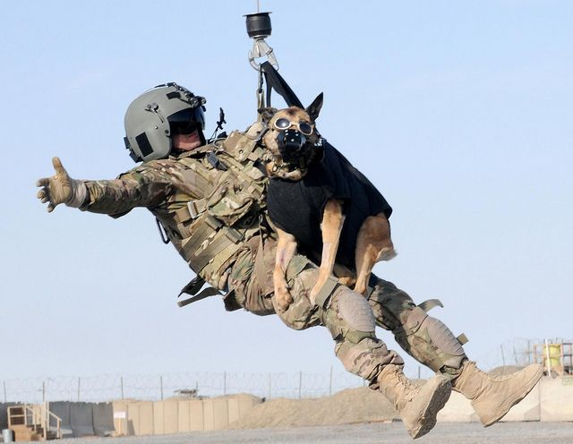 Dog Hoist Military Dogs Working Dogs Military Working Dogs