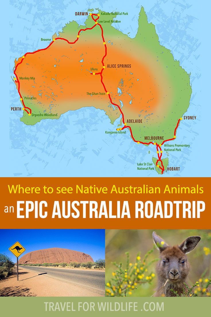 Where to see Native Australian Animals an Epic Australia Roadtrip is part of Where To See Native Australian Animals An Epic Australia - Where to See Native Australian Animals an Epic Australia Roadtrip When I was a kid growing up in upstate New York, I had a big map of Australia on my wall  It was covered with illustrations of native Australian animals to show where they lived  Australia was literally the farthest place away from me in the entire world and it was filled with bizarre creatures, the likes of which I had never seen  At age 12 I couldn't imagine anything more exotic or foreign or adventurous than traveling across this alien landscape in search of kangaroos and echidnas and Tasmanian