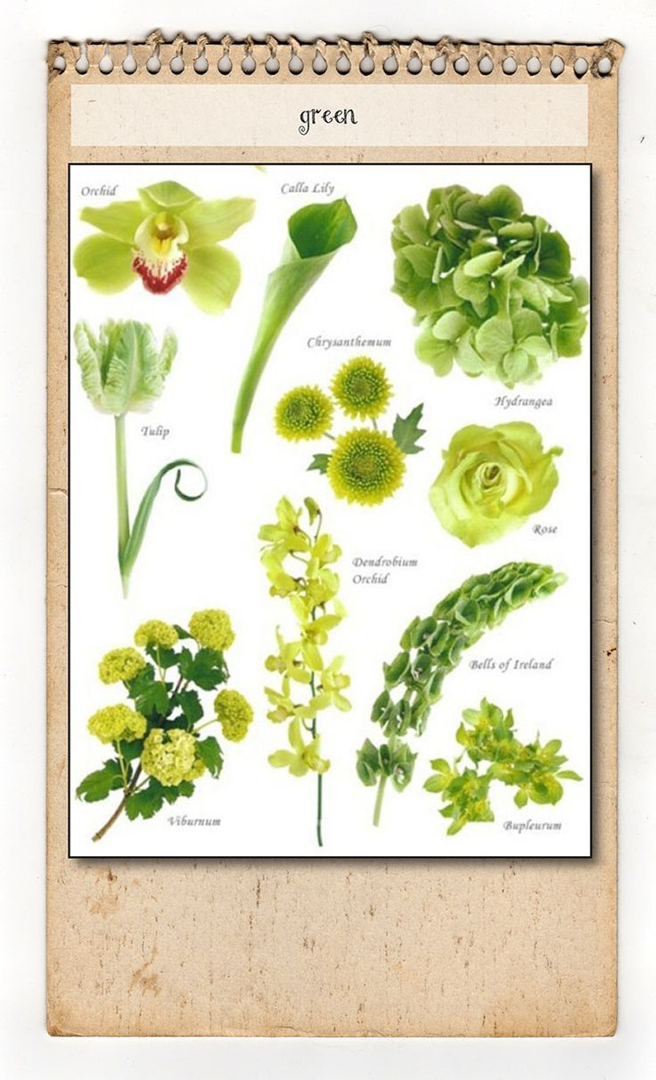Flowers Chart With Names In English Green flower chart   Vintage ...
