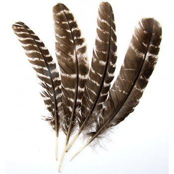 Eagle Feather Dream Catcher Native American Eagle Feather Feathers Dream Catchers 17
