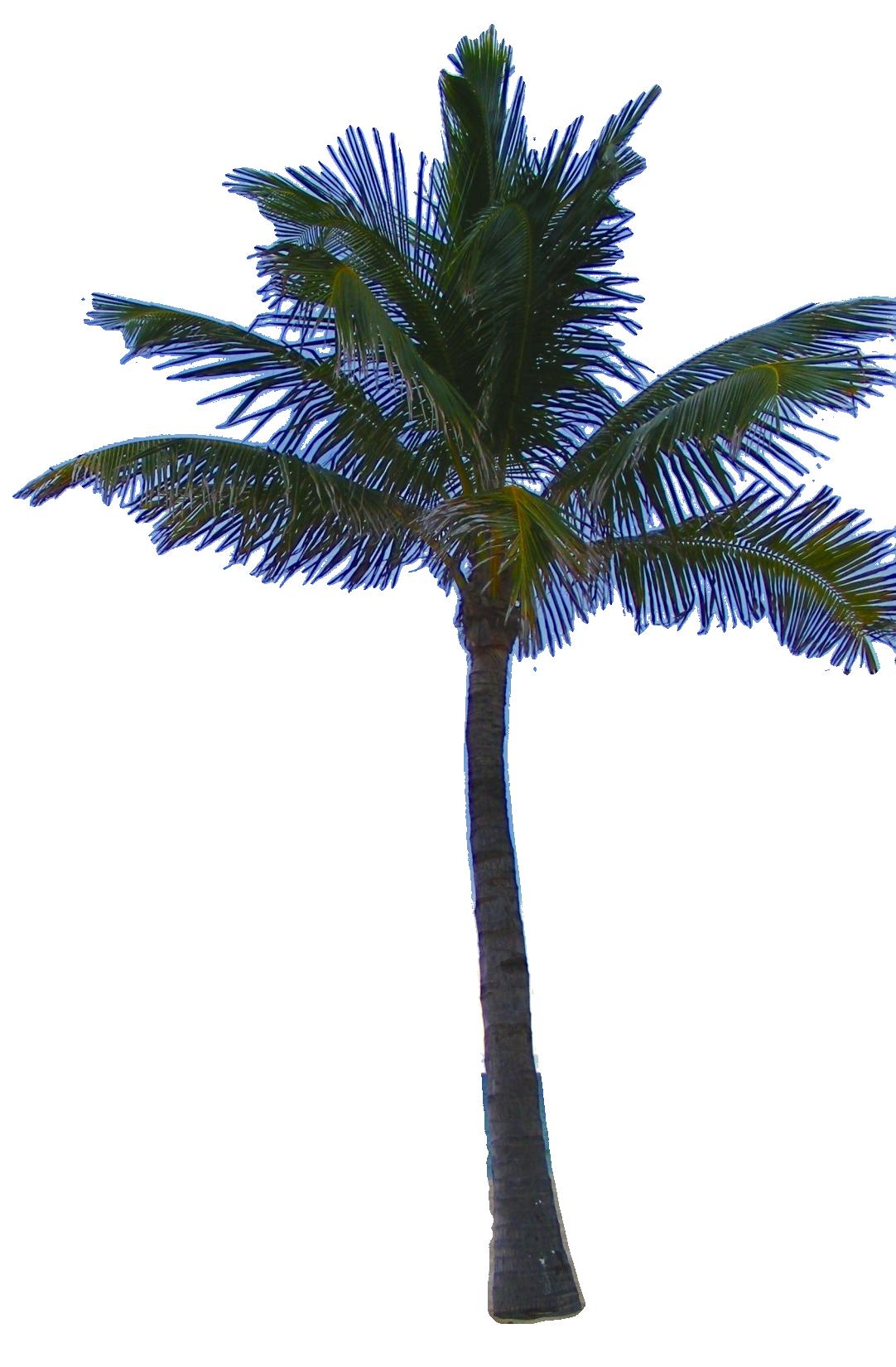 Palm Tree Tube Stock Png By Digitaltwist D30segu Png 1 082 1 650 Pixels