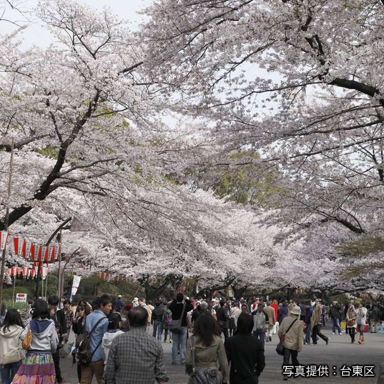 Jr Edition Visit All Of Tokyo In One Day With The Tokyo Metropolitan District Pass Live Japan Travel Guide Japanese Travel Tokyo Travel Ueno Park