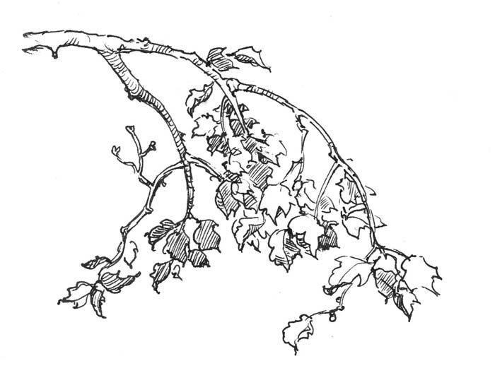 Line Drawing Tree Tattoo : Gideonkendall nature tattoos pinterest drawing