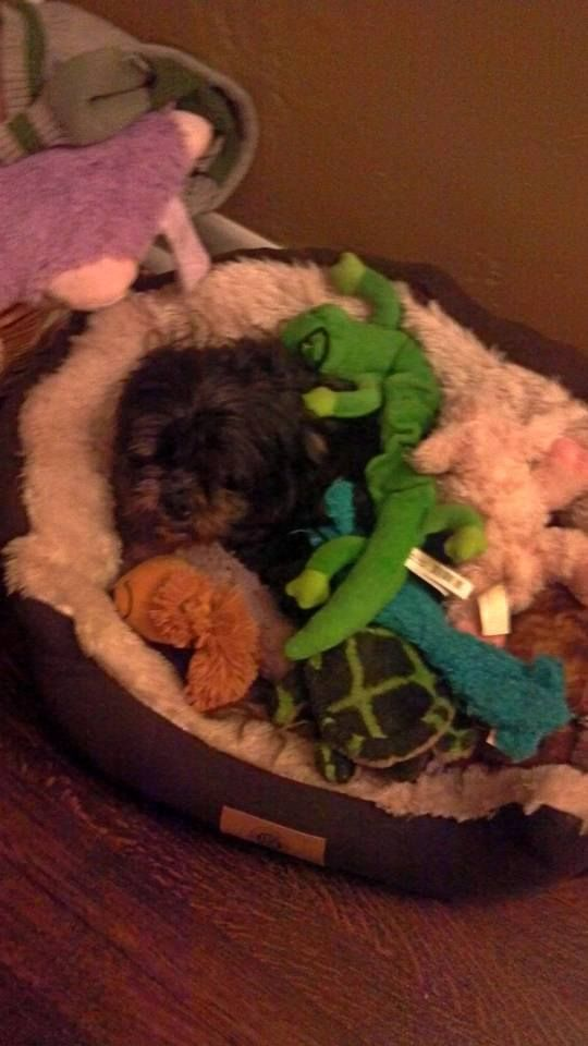 Ryat James in his bed of toys