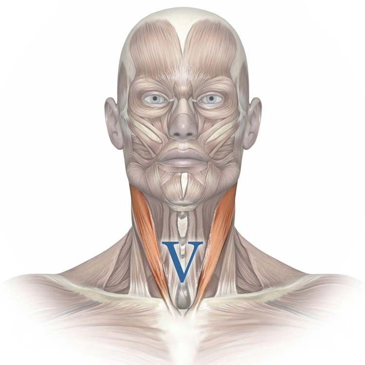 Breathing and diagram of sternocleidomastoid muscle showing the V ...