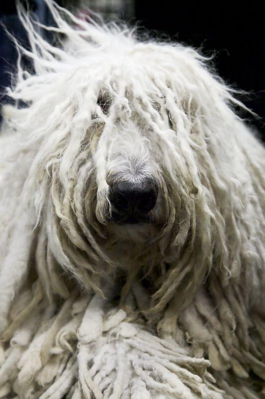 Dog Fur Bed