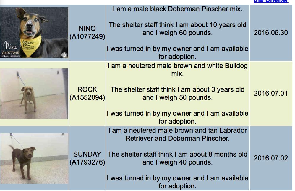 Miami-Dade Animal Services www.miamidade.gov/animals 7401 NW 74th Street Miami…