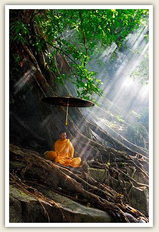 Idee Par Oriental Amy Sur Bonsai Belle Nature Paysage Photographe Nature