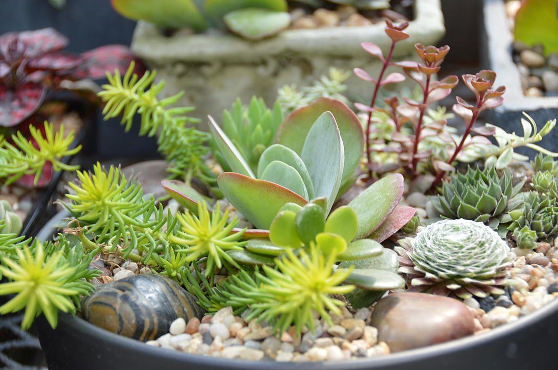 plante grasse leclerc