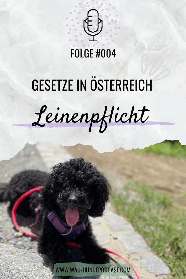 Pin Auf Hunde In Osterreich