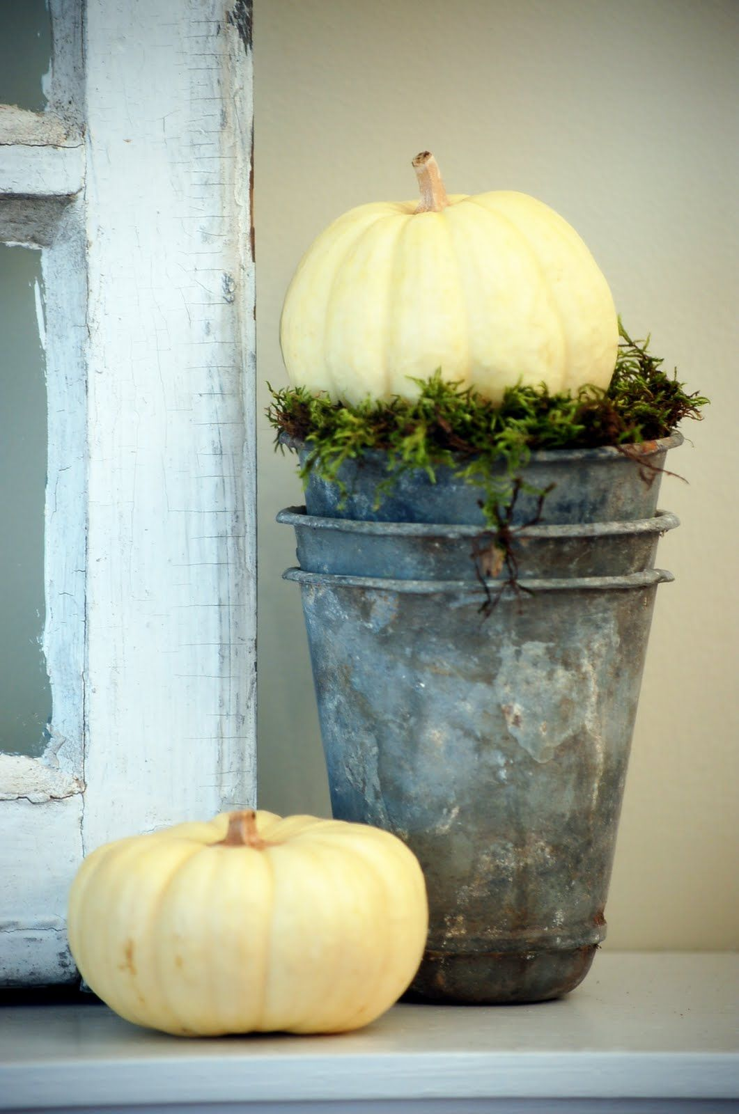 white pumpkins and galvanized containers