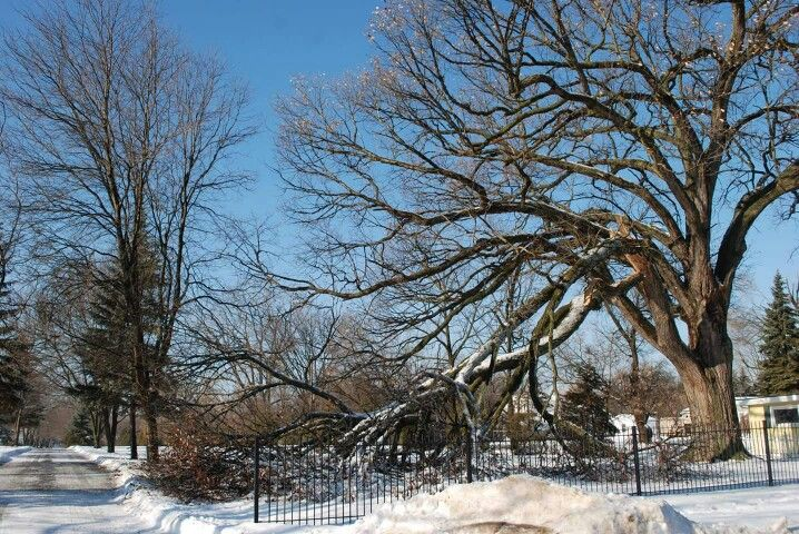 2013 Storm Damage at Mt Hope Cemetery  (Holly Smith)
