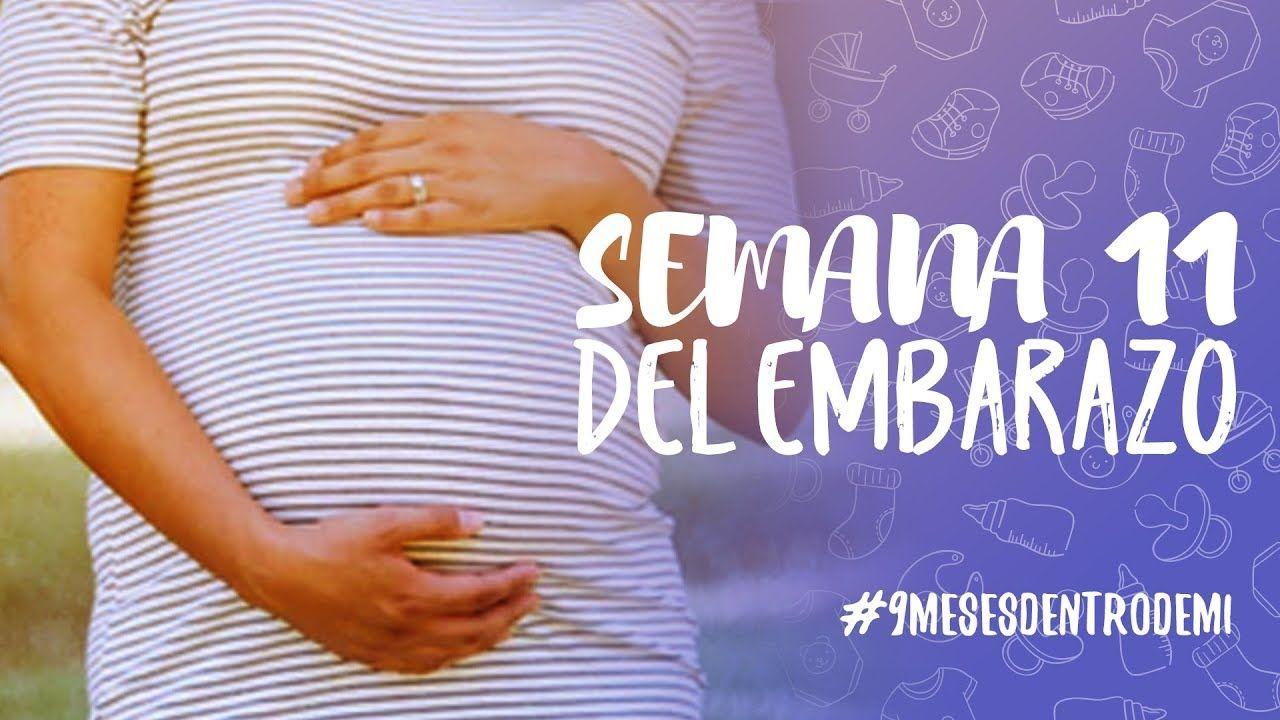Semana 11 De Embarazo 9 Meses Dentro De Mi 11 Semanas De