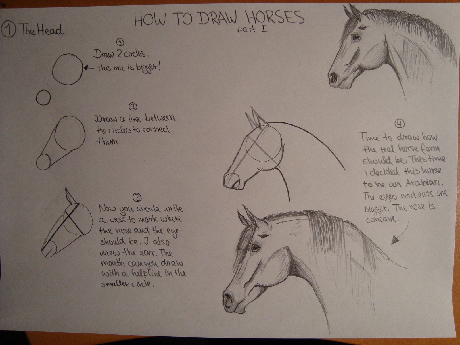 1000+ Images About How To Draw Horses On Pinterest  How Draw, Ponies And  Step By Step