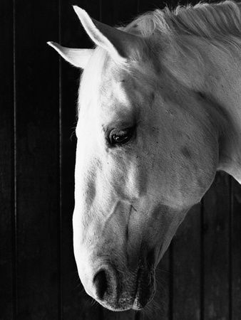 Horses photography posters and prints at art com