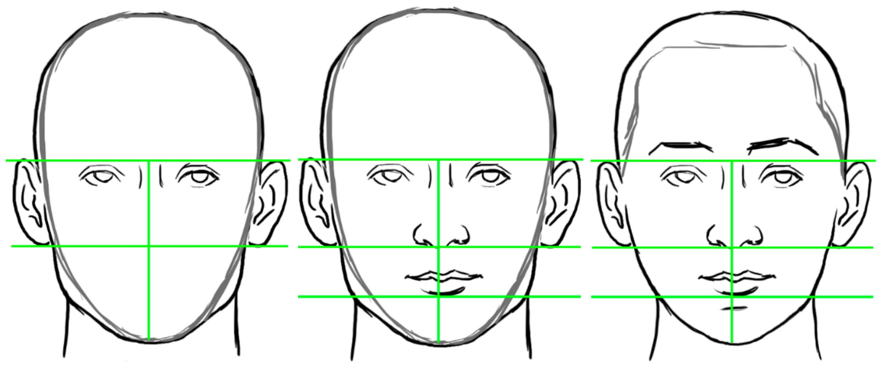 Stages of Drawing a Head