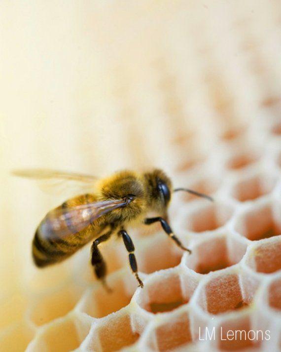 Pin Von Yaen Auf Insect Mit Bildern Bienenprodukte