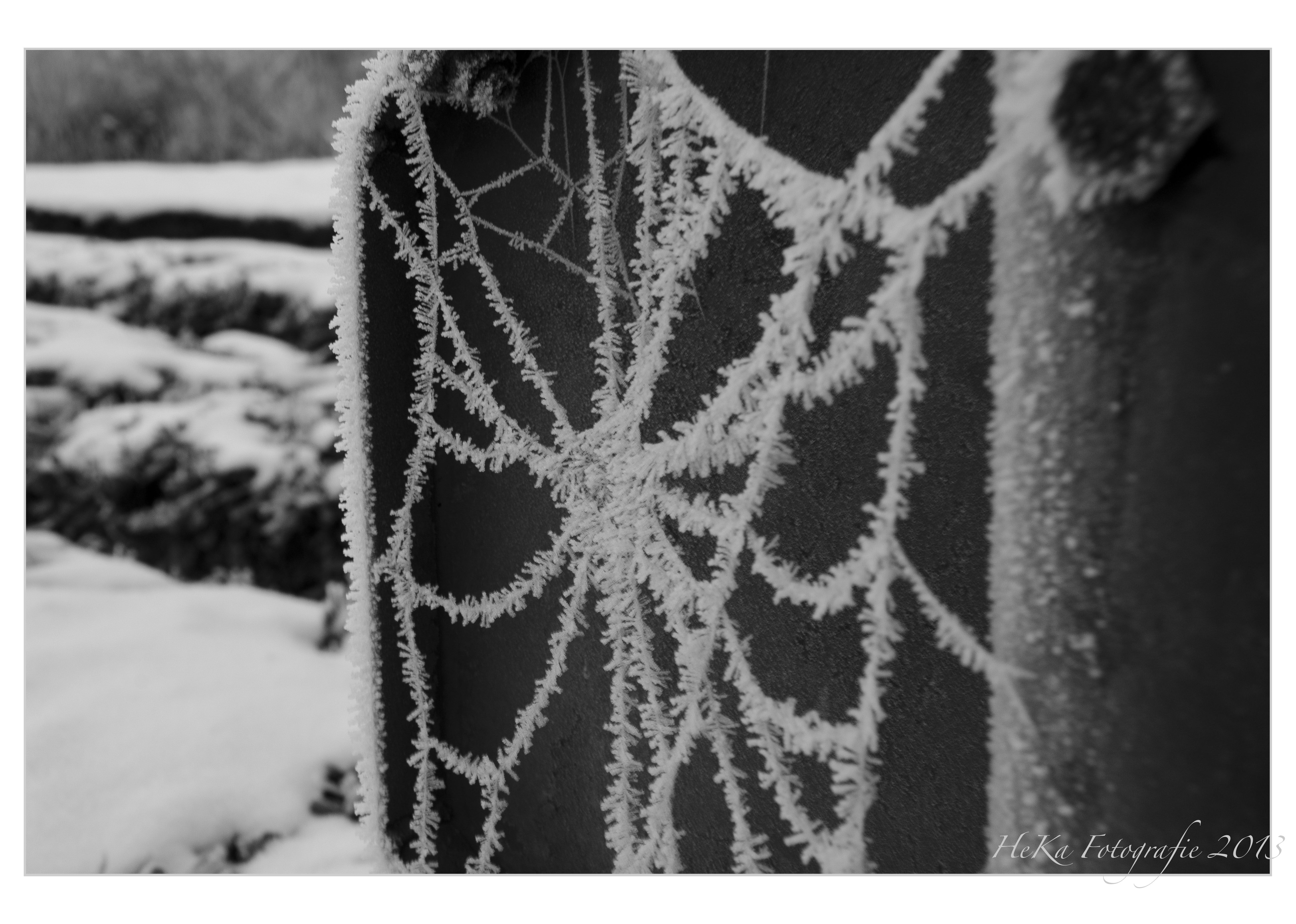 spinnenweb winter