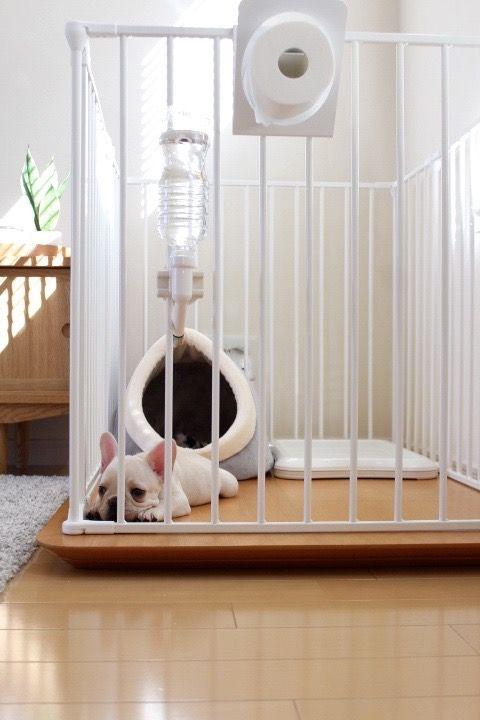 無印ネットストアで第2弾をポチ Ducks Home 楽天ブログ 犬の部屋 犬 クレート 部屋