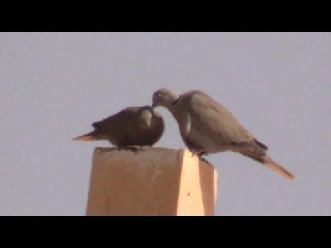 Pin By قناة اغرب الاشياء On Reptileset1animaux Strange Bird Animals