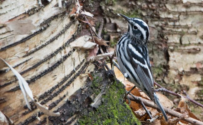 Tips For Your Spring Bird-Watching Vacation | Care2 Healthy Living