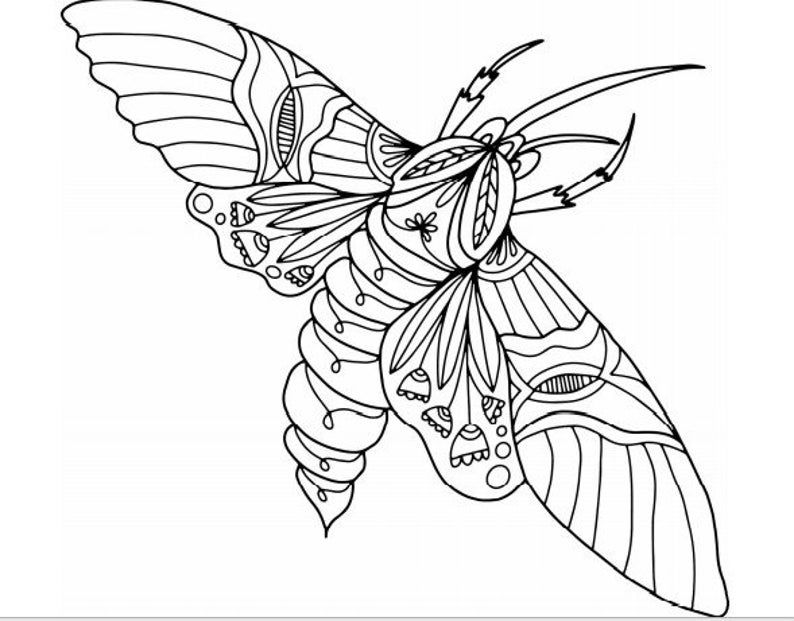 Coloring Pages 24 Printable Insect Designs In 2021 Coloring Pages Insect Coloring Pages Liquid Watercolor