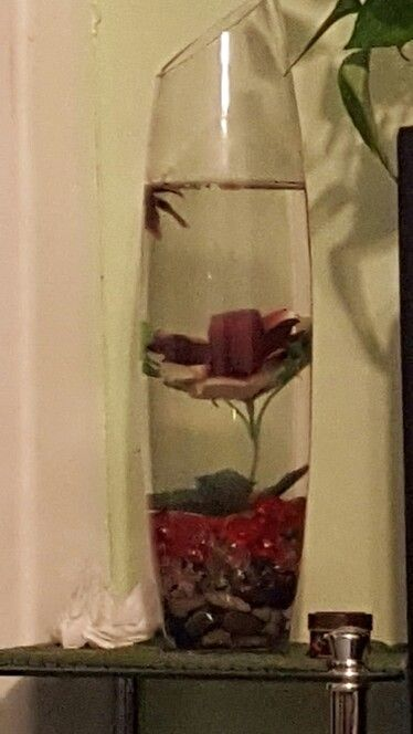 Fish with rose inside cool for decoration