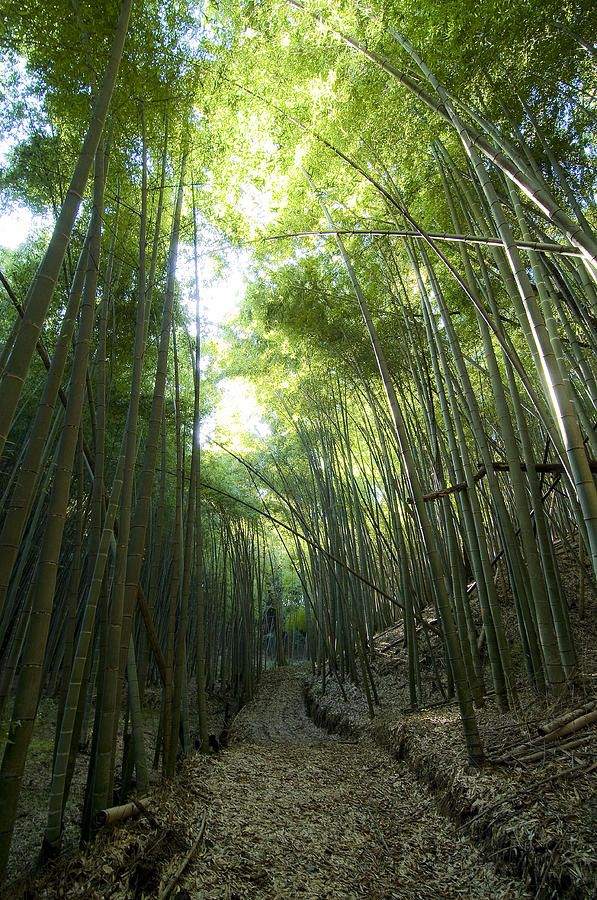 Bamboo Road by Aaron Bedell in 2019 | The lovely outdoors