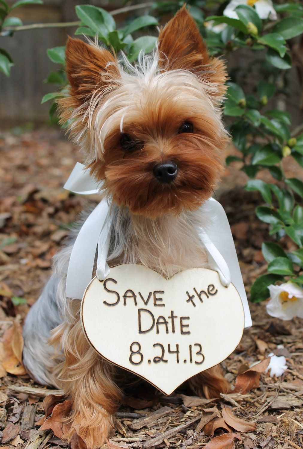 Puppy Sign - Save The Date Sign, Beautiful Cream Ribbon, Rustic Wedding, Shabby Chic Wedding. $31.99, via Etsy.