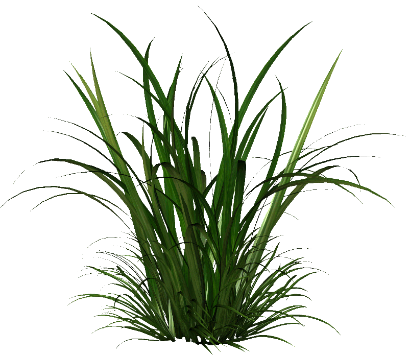 Tall grass bushes shrubs and plants reference for Long grass plants