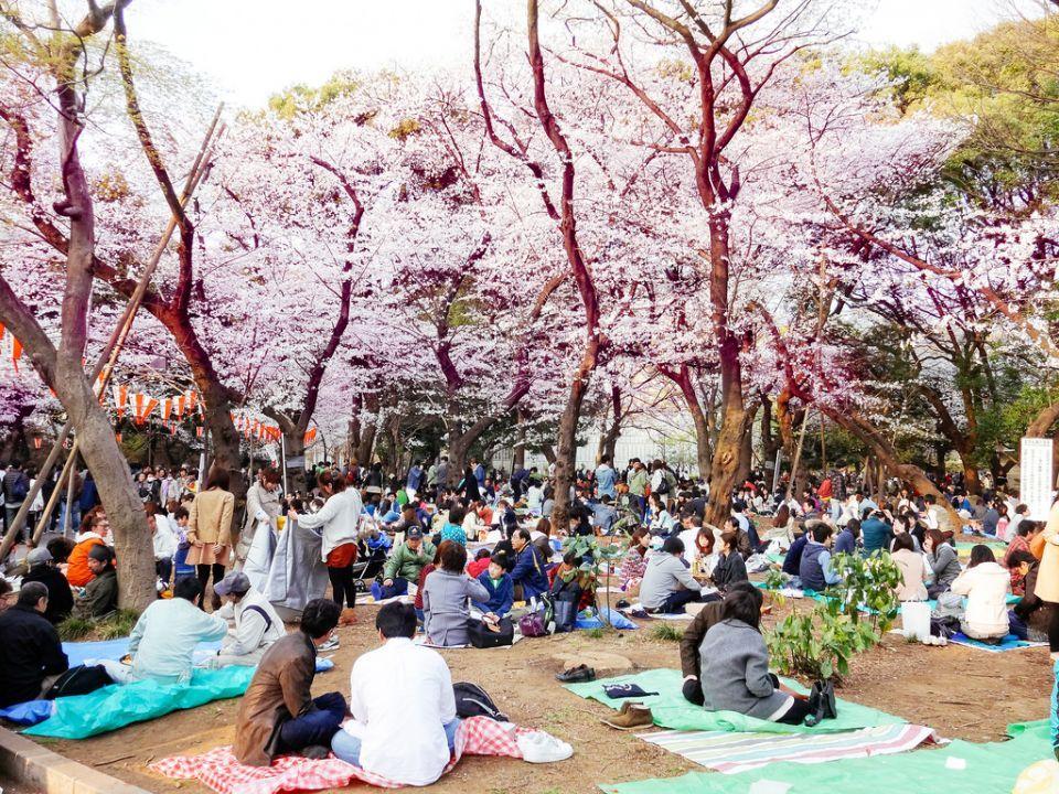 15 Things To Do In Ueno Park Tokyo Hanami Ueno Park Cherry Blossom Japan