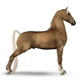 Racking Horse Hackney Horse Shetland Pony Horses