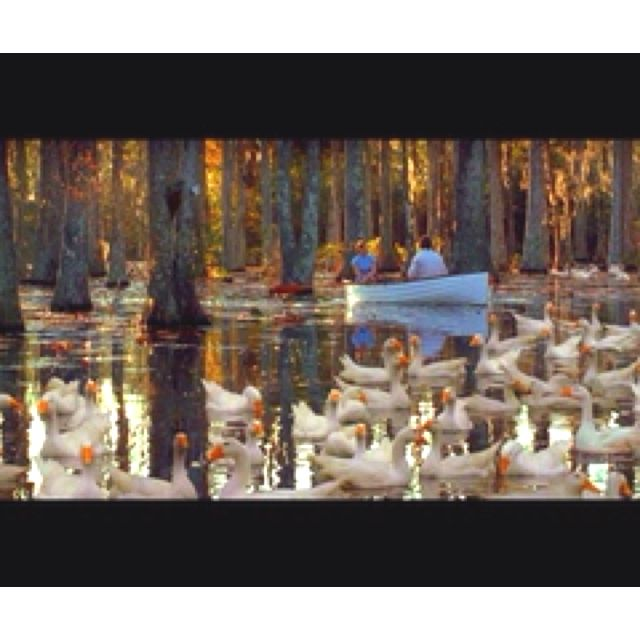 Pond Scene From The Notebook With Images Movies Like The