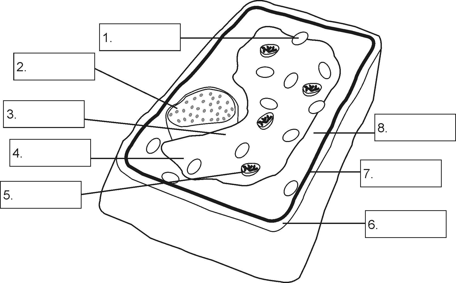 hight resolution of Plant Cell Diagram without Labels   Cell diagram