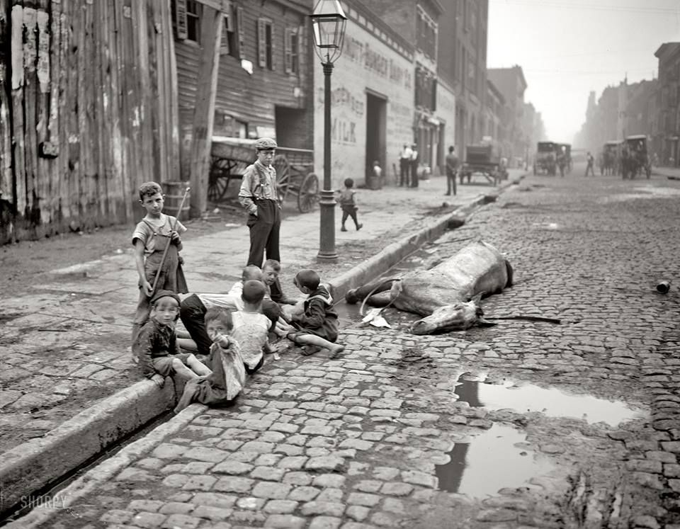 1905. Children playing in New York City street gutter next to dead horse. — That was the beginning and they have a lot ahead. They're the generation of the 1st half of the 20th cen.