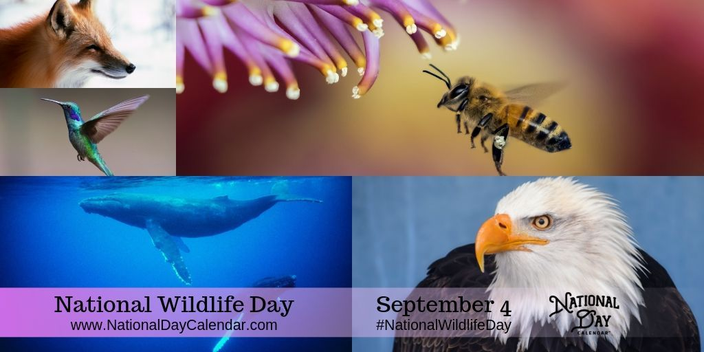 NATIONAL WILDLIFE DAY September 4 Wildlife day