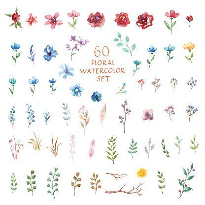 Conjunto De Flores Acuarela Diferentes Elementos Vectoriales