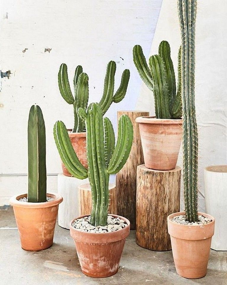 30 Creative Ideas Of Cactus Plants Decorations For Your Home Interior  Page 17 of 29